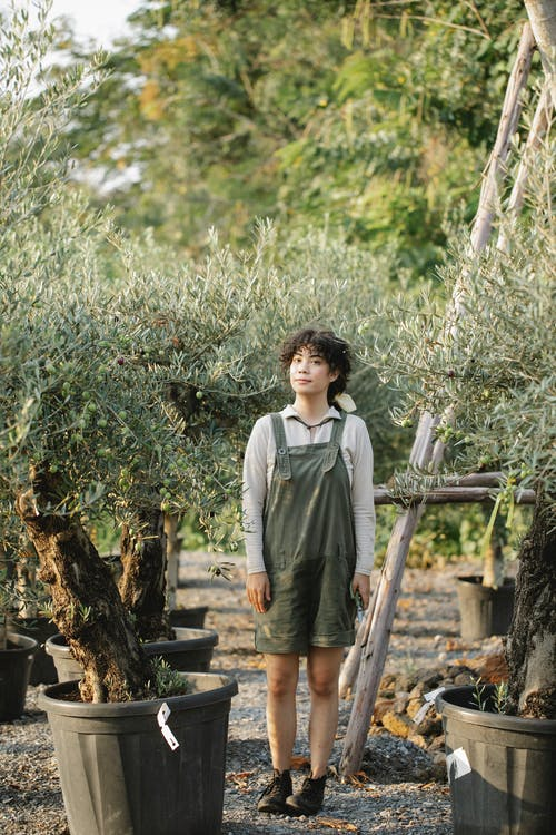 Ethnic gardener among potted olive trees on plantation
