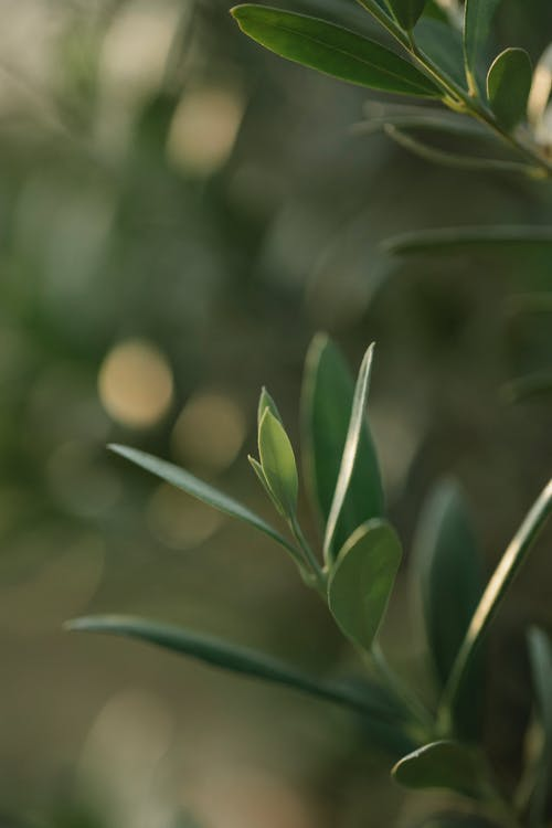 Gentle green plant leaves on thin stem growing in verdant summer park on clear day