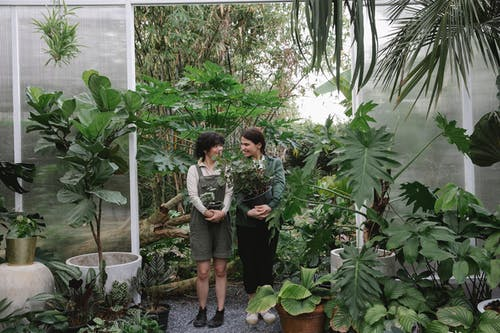 Full body of professional ethnic female gardeners looking at each other while standing with flowerpots in greenhouse with various plants with green leaves