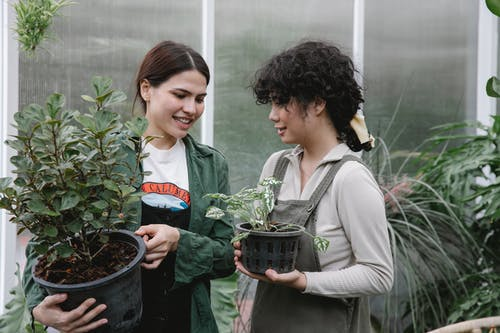 Cheerful ethnic women with potted plants near greenhouse
