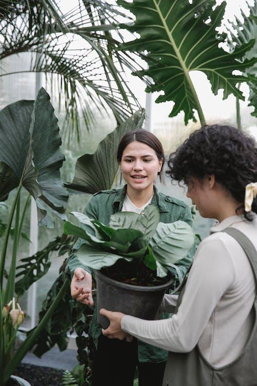 Cheerful ethnic gardeners with flowerpot in greenhouse