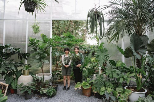 Full body of positive female coworkers with potted plants standing in hothouse with lush deciduous flowers during work in orangery