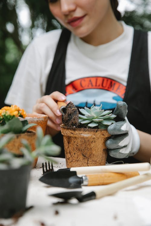 Unrecognizable female horticulturist pouring soil into pot while transplanting plant at table with gardening supply during work in botanical garden
