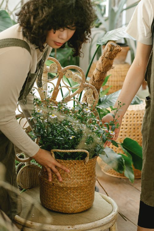 Concentrated ethnic female gardener standing at table with green flowers in wicker basket while working in orangery with anonymous coworker