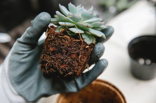 茶色の土鍋の緑の植物