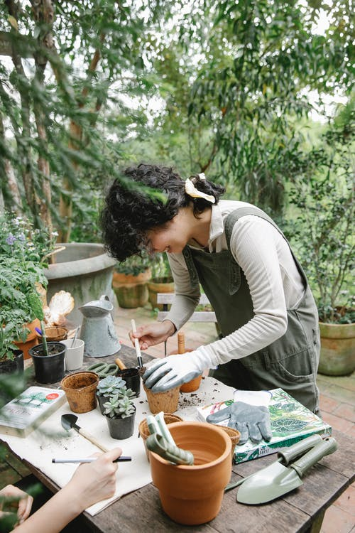 Side view of concentrated ethnic female gardener standing at wooden table with gardening tools while planting flower in pots during work in orangery