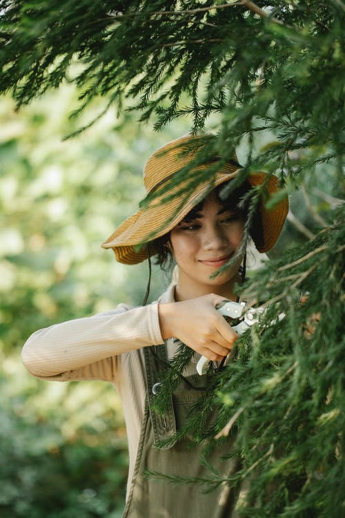 Positive ethnic female gardener wearing uniform and straw hat cutting branches of tree with pruner while working in garden on blurred background