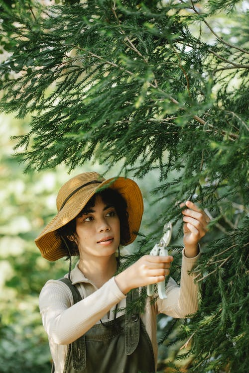 Focused ethnic woman cutting branches of tree