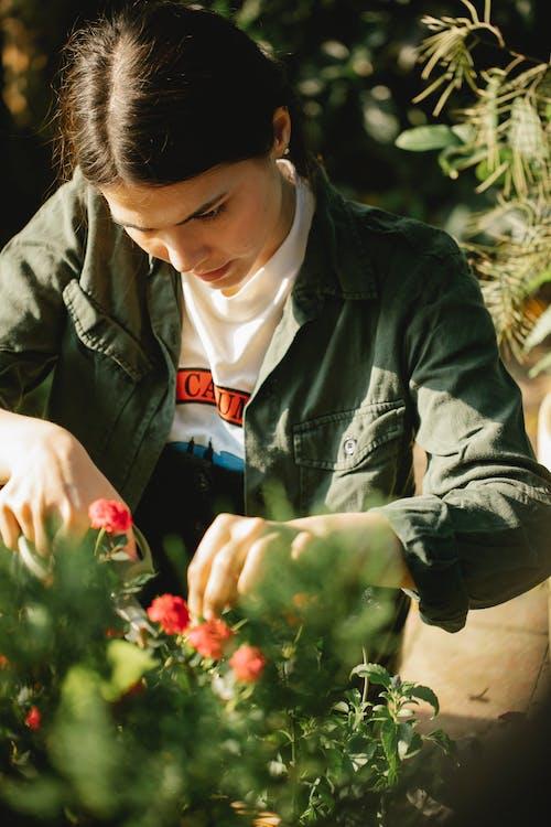 Focused ethnic woman cutting flowers in garden