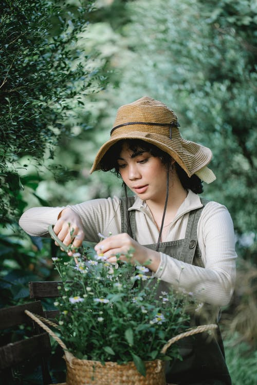 Concentrated ethnic female gardener in hat with scissors cutting small flowers in wicker basket while working in garden with green plants on blurred background