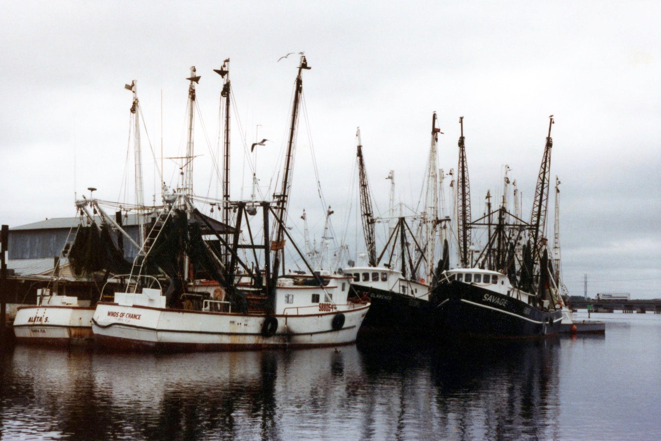 Several White Boats Near Dock