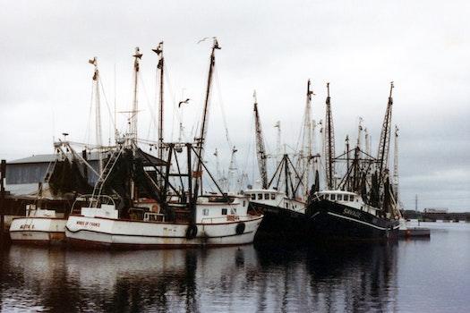 Free stock photo of sea, vehicles, water, ocean