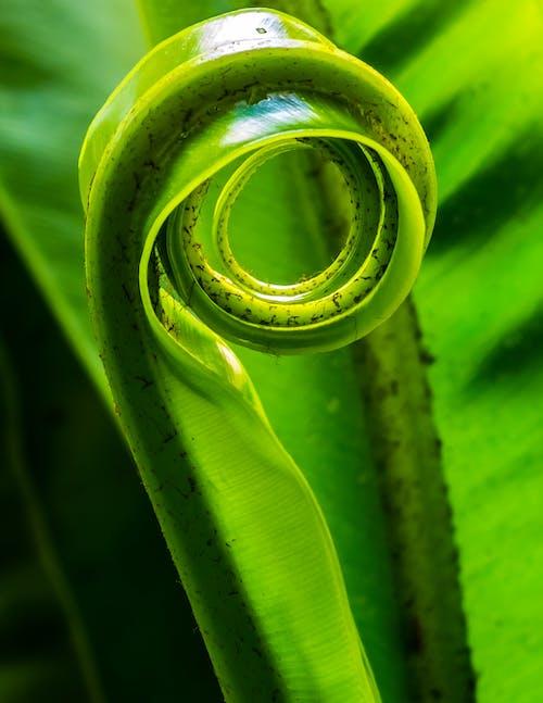 녹색, 매크로, 식물, 클로즈업의 무료 스톡 사진