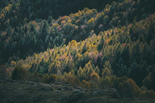 Picturesque scenery of lush colorful trees growing on mountain slope on cloudy autumn day