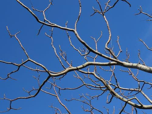 Foto d'estoc gratuïta de arbre, branques, cel, cel blau