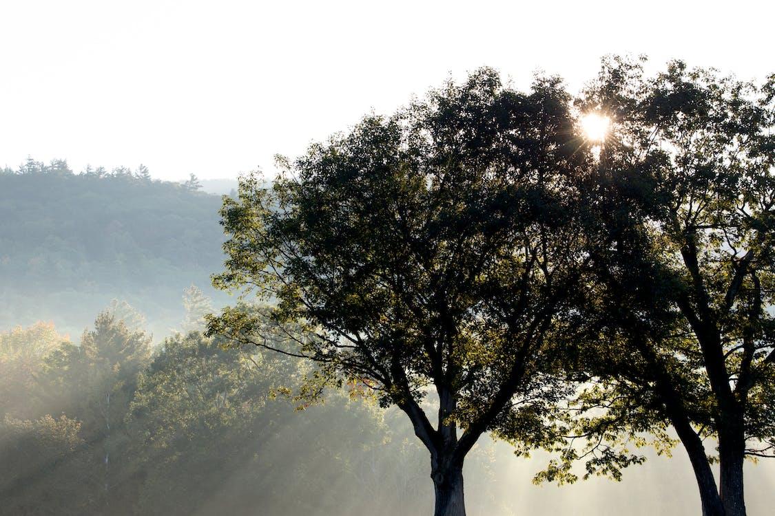 kmeny stromů, krajina, les