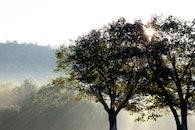 landscape, nature, sun