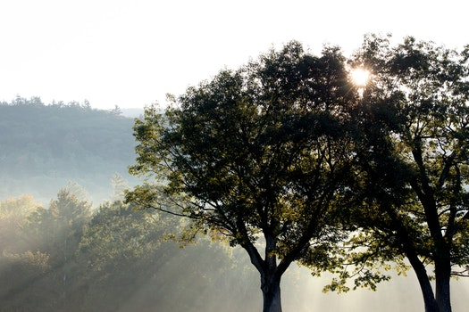 Silhouette Photo of Green Trees Under Crepuscular Rays