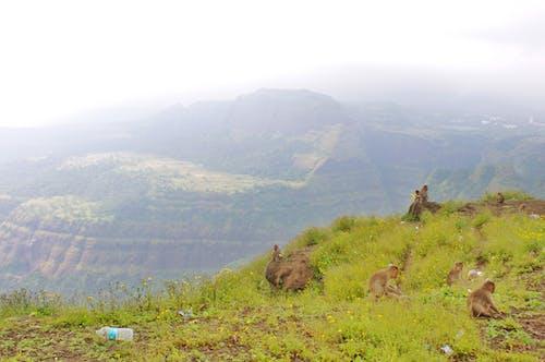 Free stock photo of india, monkeys, mountain, mountains