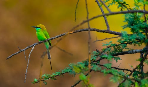 Colorful bird sitting on branch of tree