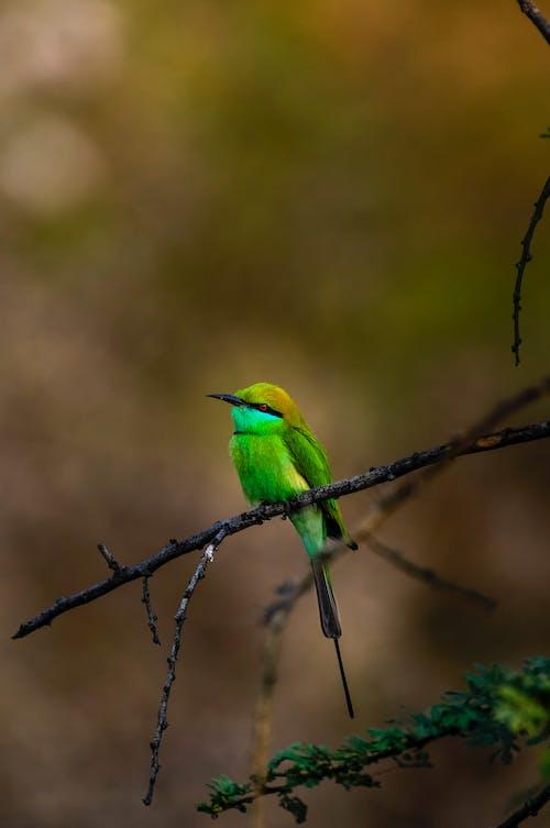 Bright green bird on thin twig