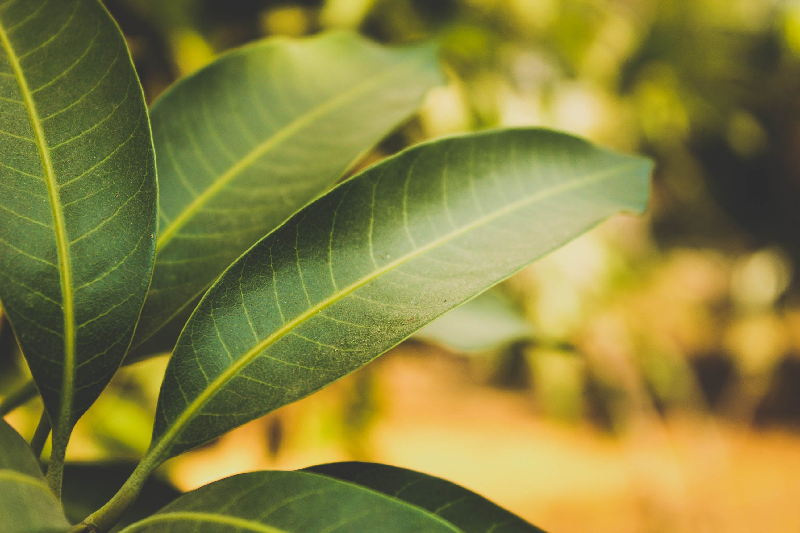 Free stock photo of plant, blur, leaves, focus