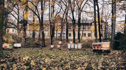 Základová fotografie zdarma na téma barvy podzimu, budovy, podzimní les, stará budova
