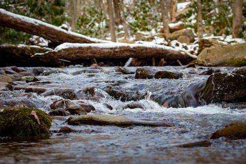 Free stock photo of fishing in mountain streams, franklin nc mountain streams, gentle stream sounds
