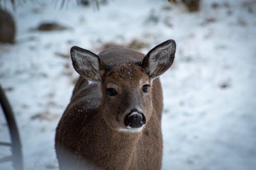 Free stock photo of baby deer, baby deer pet, baby deer rescue