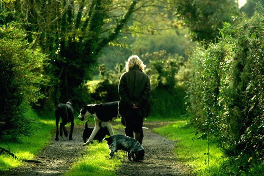 Woman in Black Jacket and 4 Dogs Walking on Dirt Path Between Trees