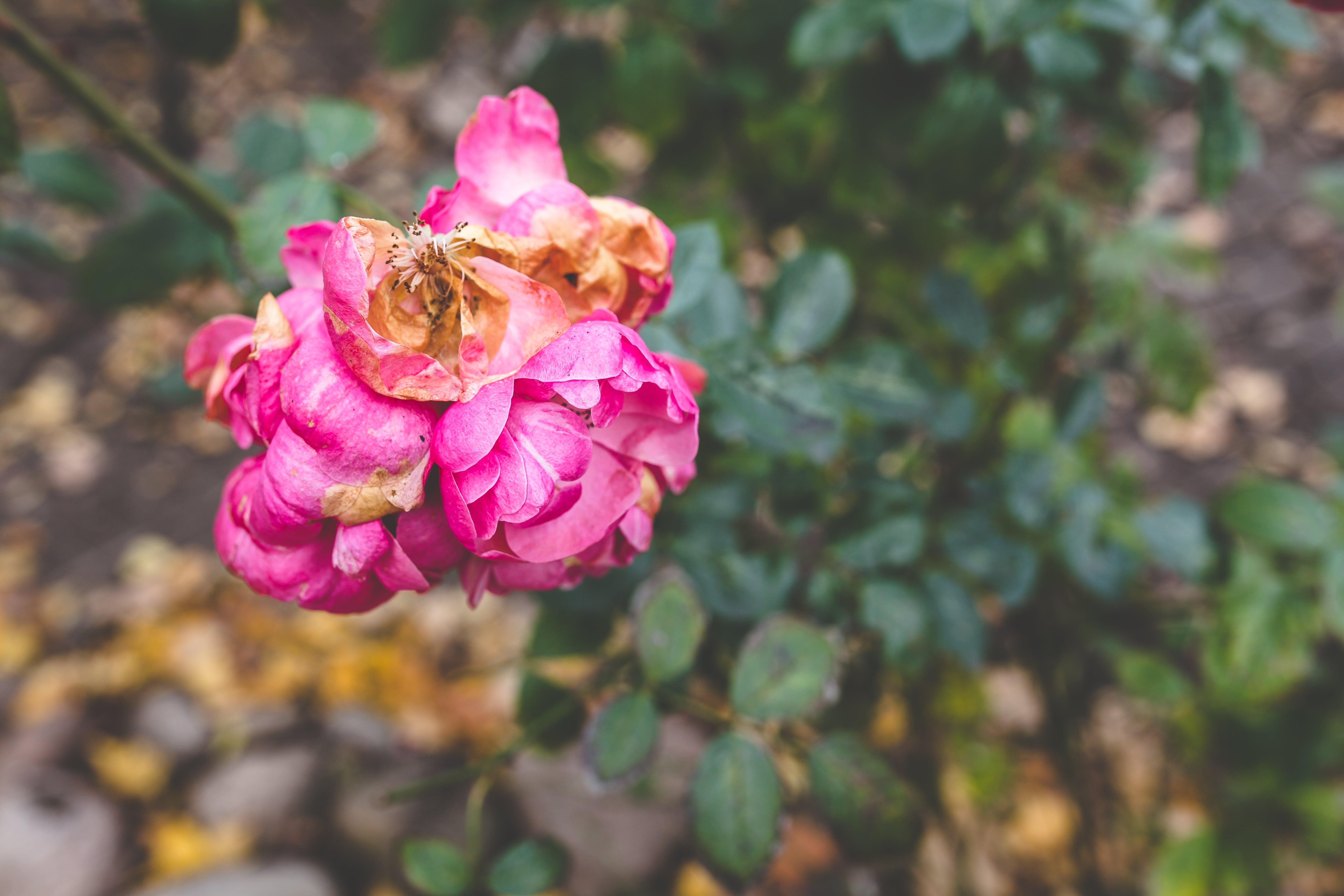 Gratis arkivbilde med årstid, bleknet, blomst, død