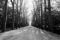 black-and-white, road, nature