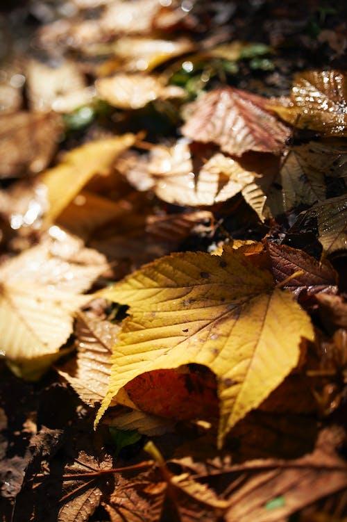 Fotos de stock gratuitas de hojas secas, húmedo, profundidad de campo