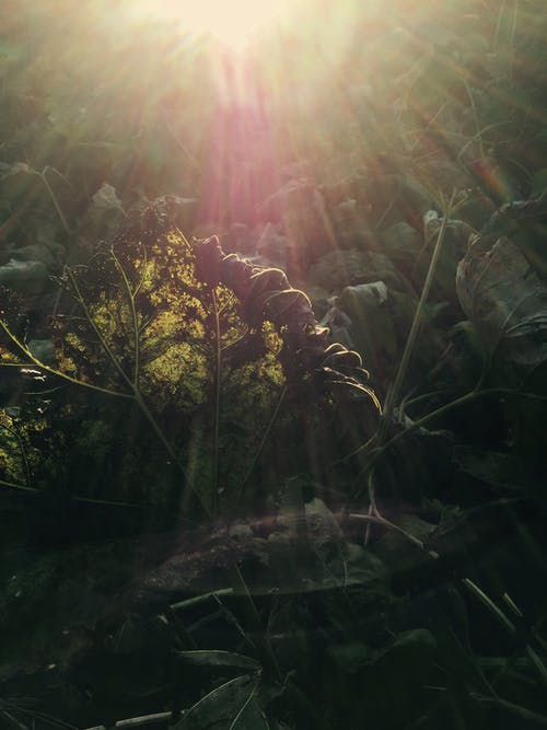 Free stock photo of lens flare, plant, plantlife