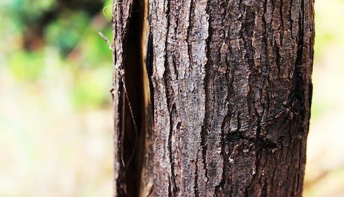 ağaç, ağaç kabuğu, bir ağaç kabuğu, yaşlı ağaç içeren Ücretsiz stok fotoğraf