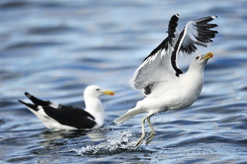 Two White Birds on Body of Water