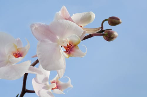 Pink and White Orchids\