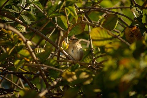 Fotos de stock gratuitas de ala, animal, árbol