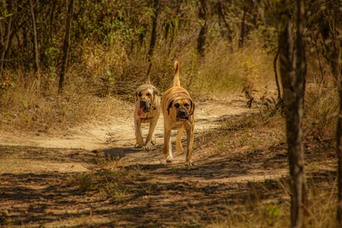 Purebred dogs walking among plants in nature