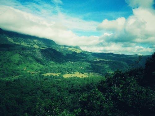 健行, 斯里蘭卡, 樹木, 深綠色 的 免費圖庫相片