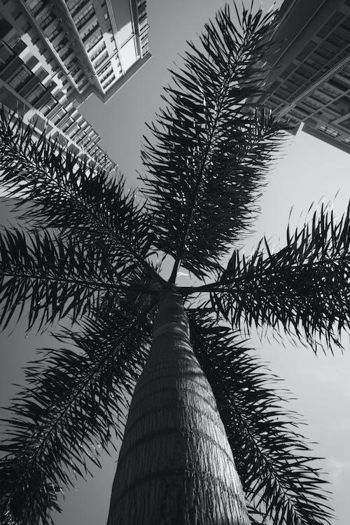 Foto stok gratis akomodasi, alami, bangunan