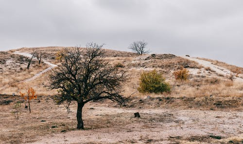 Picturesque landscape of shrubs and trees growing among dry grass on hills under cloudy gray sky