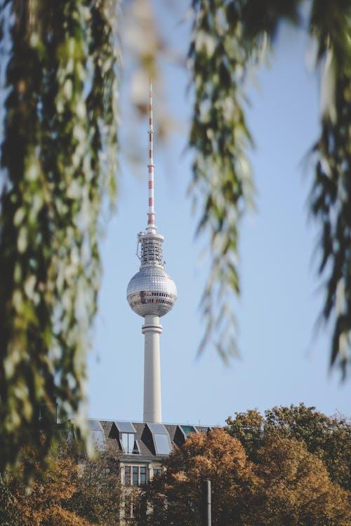 Alemanha, arquitetura, árvore