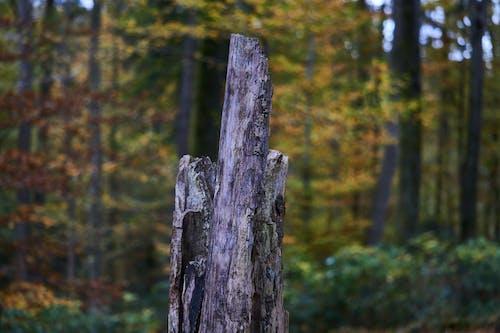 Ilmainen kuvapankkikuva tunnisteilla kanto, puu
