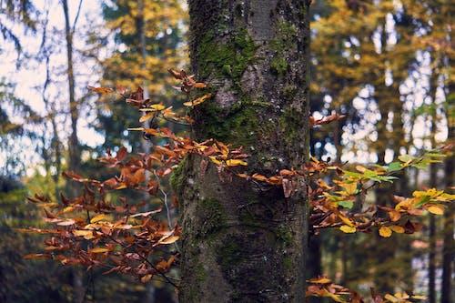 Ilmainen kuvapankkikuva tunnisteilla puu, sammal, värikäs