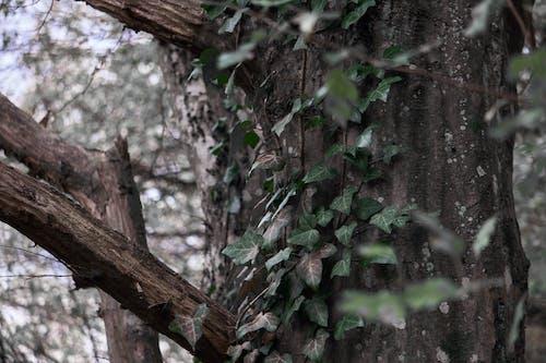 Ilmainen kuvapankkikuva tunnisteilla harmaa, puu, vihreä