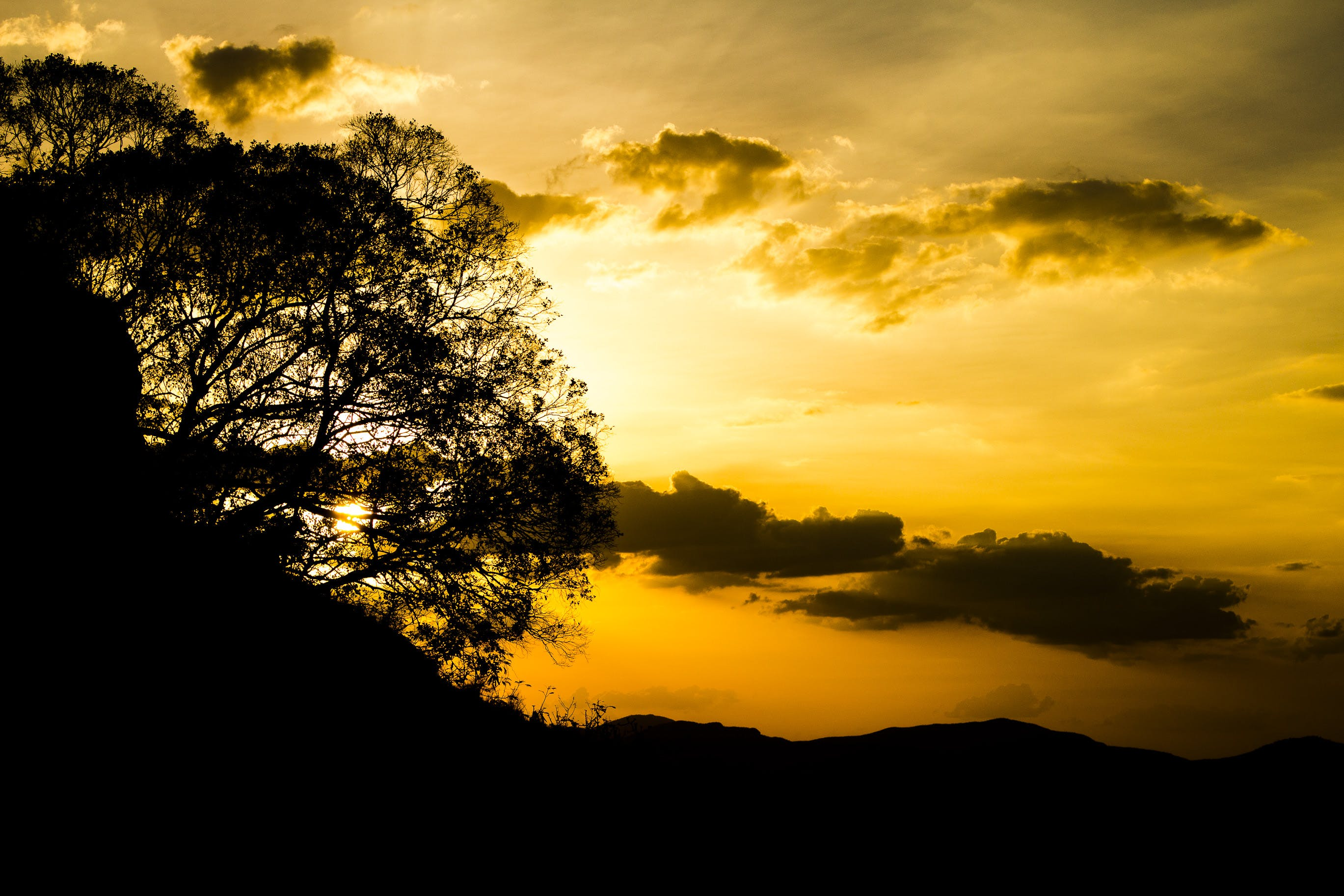 Silhouette of Tree Under Orange Sunset