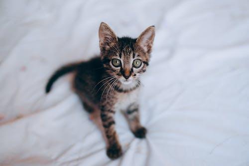 Fotos de stock gratuitas de animal, bigotes, cama, doméstico