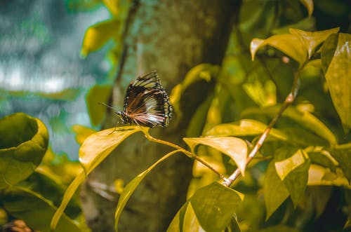 Free stock photo of butterflies, butterfly, butterfly insect