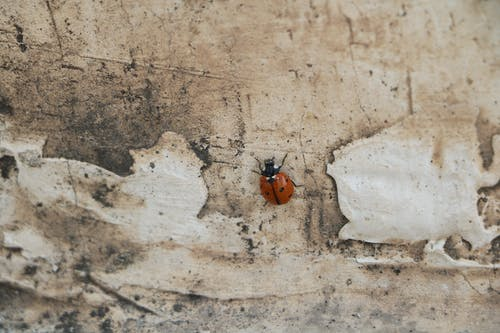 Free stock photo of bug, insect, ladybird, ladybug